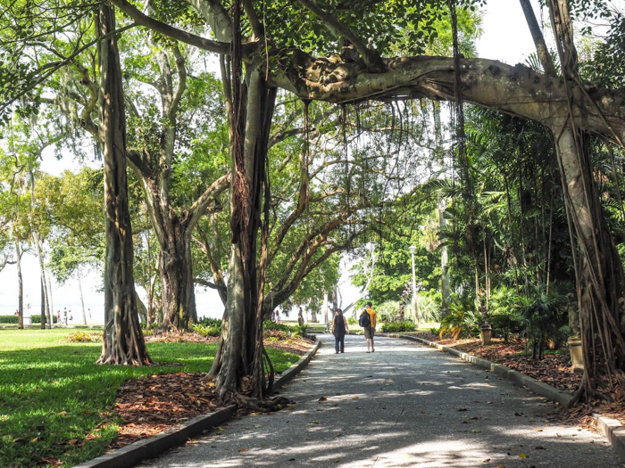 The Ringling // Getting My Italy Fix in Florida | Ringling | Ringling art museum and sculpture garden | Sarasota, Florida | The Ringling art museum | Palm Trees | Tree path