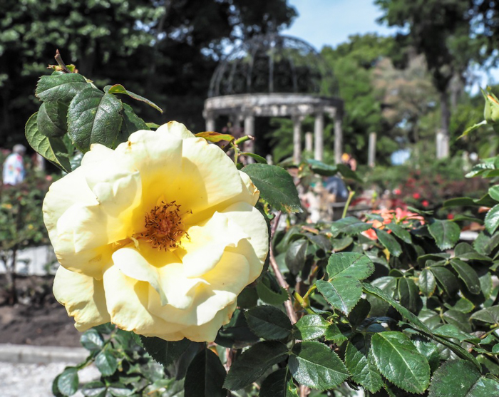 The Ringling // Getting My Italy Fix in Florida | Ringling | Ringling art museum and sculpture garden | Sarasota, Florida | The Ringling art museum | Ringling rose garden