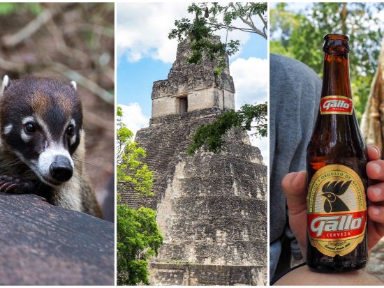 Belize to Tikal Day Trip: Important Tips for Your Guatemala Day Tours | San Ignacio, Belize to Tikal National Park, gallo beer, coatimundis, ancient Maya temples