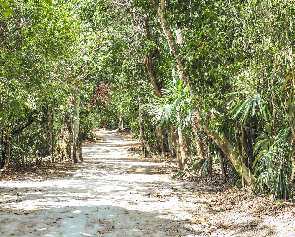 jungle walking path covered in sun surrounded by trees