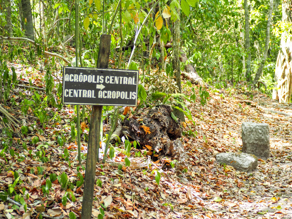 sign reading central acropolis in the jungle on belize to tikal day trip