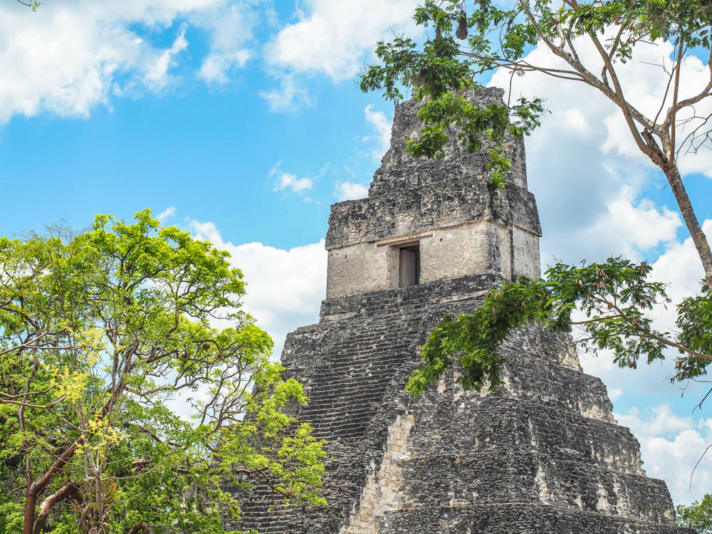 top of ancient temple seen through the trees on belize to tikal day trip