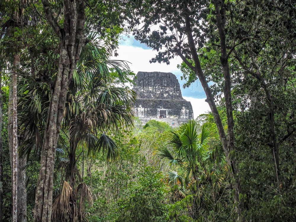 top of ancient temple seen through jungle trees