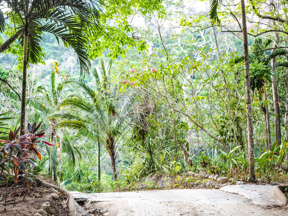 dirt path surrounded by tropical trees in the belize jungle
