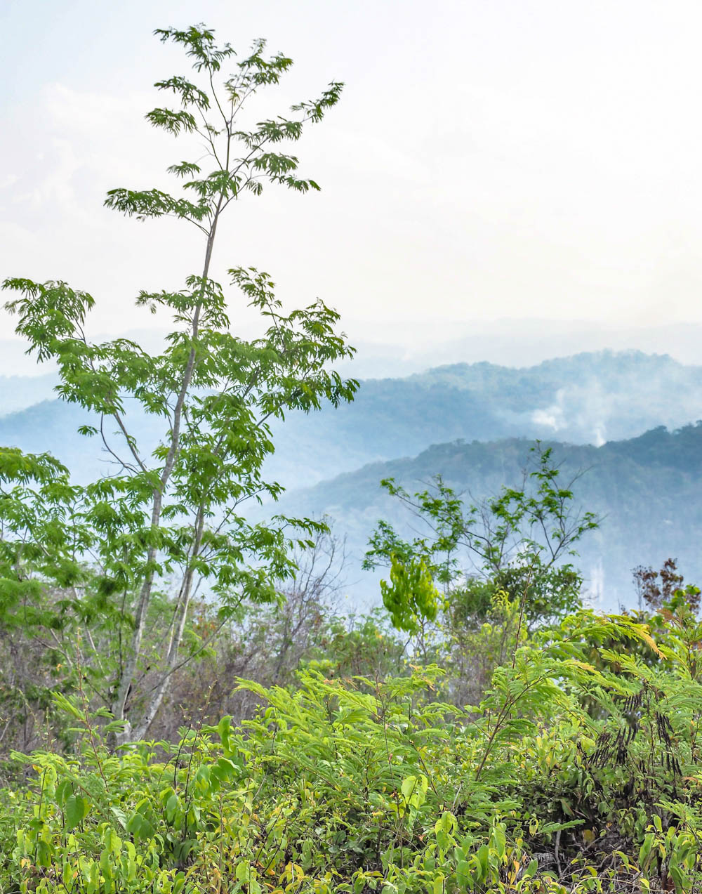 view of blue mountains and green trees in belize
