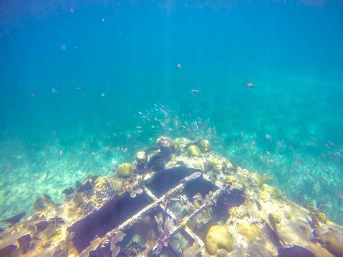 sunken barge surrounded by fish | Snorkeling in Belize with Caye Caulker's Caveman Snorkeling Tours