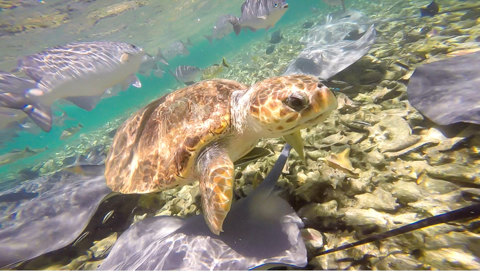 sea turtle up close | Snorkeling in Belize with Caye Caulker's Caveman Snorkeling Tours