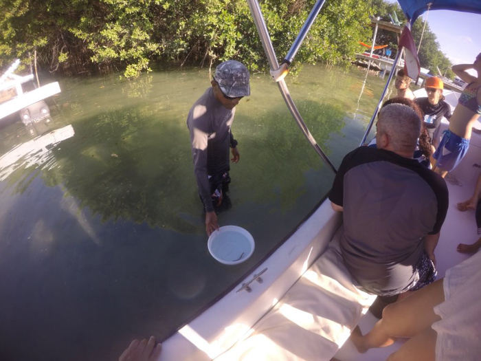 Snorkeling | Belize | Learning about seahorses with Caveman Snorkeling Tours in Caye Caulker, Belize