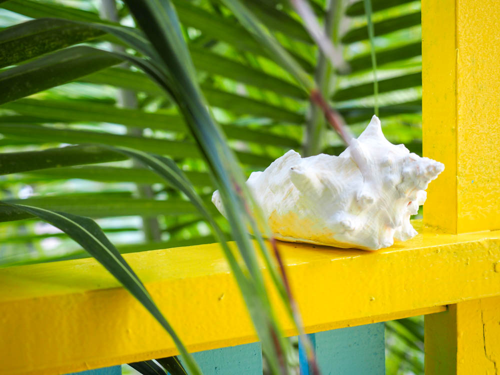 conch shell on yellow ledge under palm trees