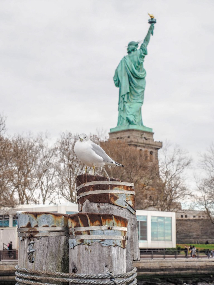 Visiting the Statue of Liberty, New York City // seagull
