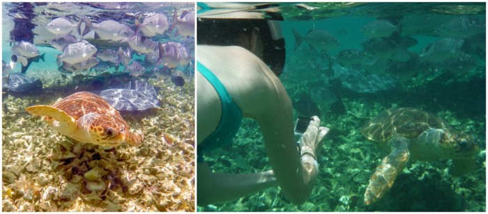 snorkeling with vs without a gopro filter in Belize