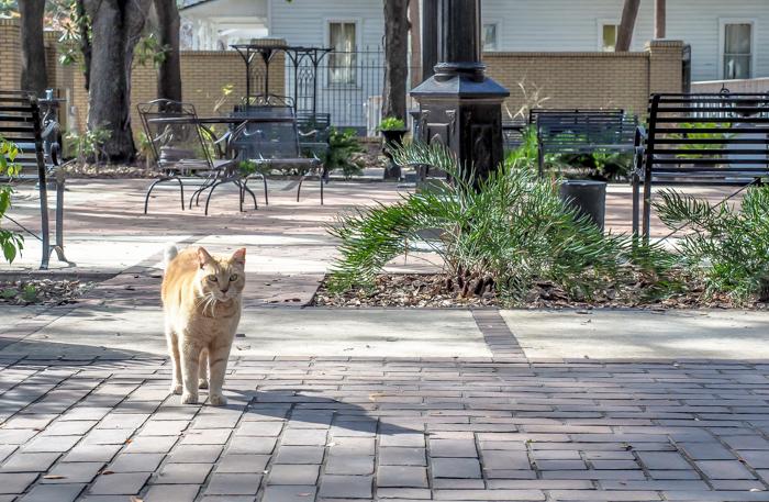 Spend a day in Ybor City | Tampa, Florida | Ybor City State Museum | Ybor City Museum State Park | History of Ybor City | Garden cat