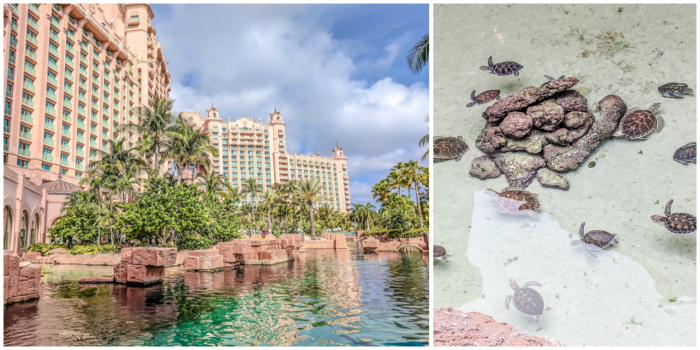 Do This, Not That // 2 Days in The Bahamas | Atlantis Royal Towers Resort | Where to stay in The Bahamas #fountain #bahamas #atlantis #honeymoon #caribbean #island #thebahamas #seaturtle