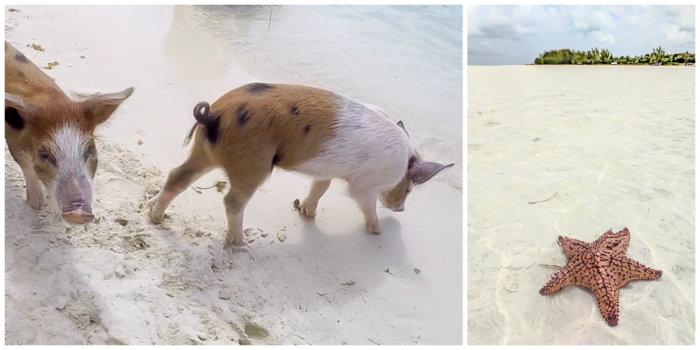 Do This, Not That // 2 Days in The Bahamas | Using a GoPro dome to take pictures of swimming with pigs in The Bahamas | Underwater photography in the Caribbean #thebahamas #bahamas #gopro #swimmingwithpigs #caribbean #beachvacation #island #photographytips