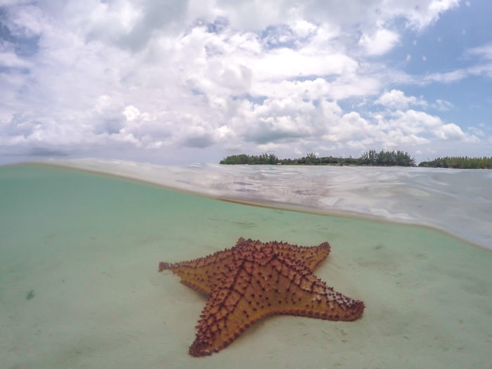 Do This, Not That // 2 Days in The Bahamas | Using a GoPro dome to take pictures of starfish in The Bahamas | Underwater photography in the Caribbean #thebahamas #bahamas #gopro #starfish #caribbean #beachvacation #island #photographytips