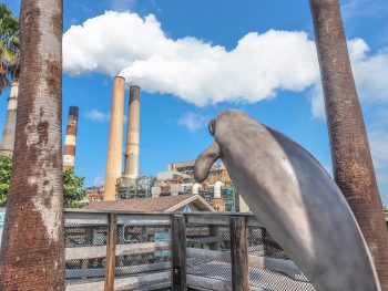 All you need to know about this hidden gem -- the Manatee Viewing Center at the Tampa Electric Company's power plant. See thousands of wild manatees, take a nature walk, and learn about these sweet sea cows in the learning center... all for FREE!