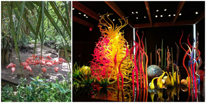 Flamingos at ZooTampa and display at Chihuly Museum // How to use the Tampa Bay CityPASS as a childless adult. #chihuly #tampabay #florida #citypass #traveltips #vacation #tampa #timebudgettravel