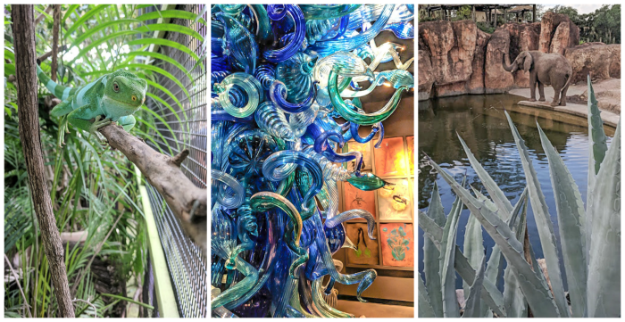 ZooTampa and Chihuly Collection // How to use the Tampa Bay CityPASS as a childless adult. #zoo #tampabay #florida #citypass #traveltips #vacation #tampa #timebudgettravel