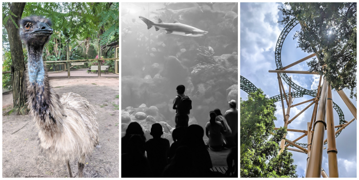 Florida aquarium shark tank, busch gardens, zootampa emu // How to use the Tampa Bay CityPASS as a childless adult. #aquarium #tampabay #florida #citypass #traveltips #vacation #tampa #timebudgettravel