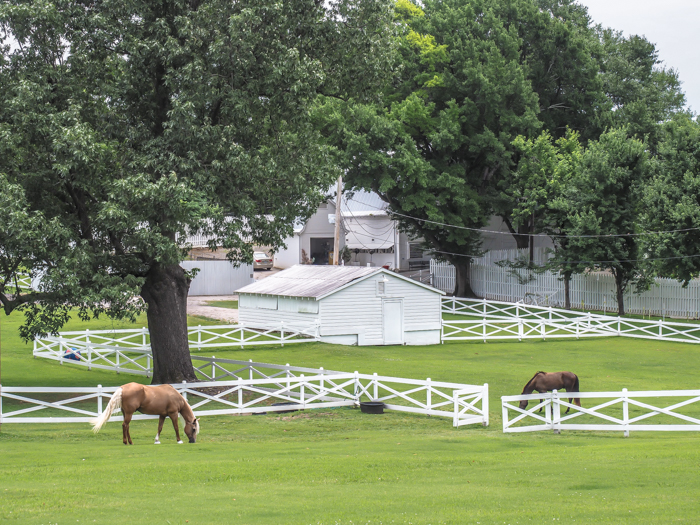 Horses | 13 Reasons to Visit Graceland in Memphis, Tennessee even if you're not an Elvis Presley fan #Elvis #Graceland #Memphis #traveltips #horse