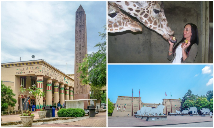 200 things to do in Memphis, Tennessee for first-time visitors - a local's guide | Memphis Zoo, #memphiszoo #memphis #traveltips #giraffe
