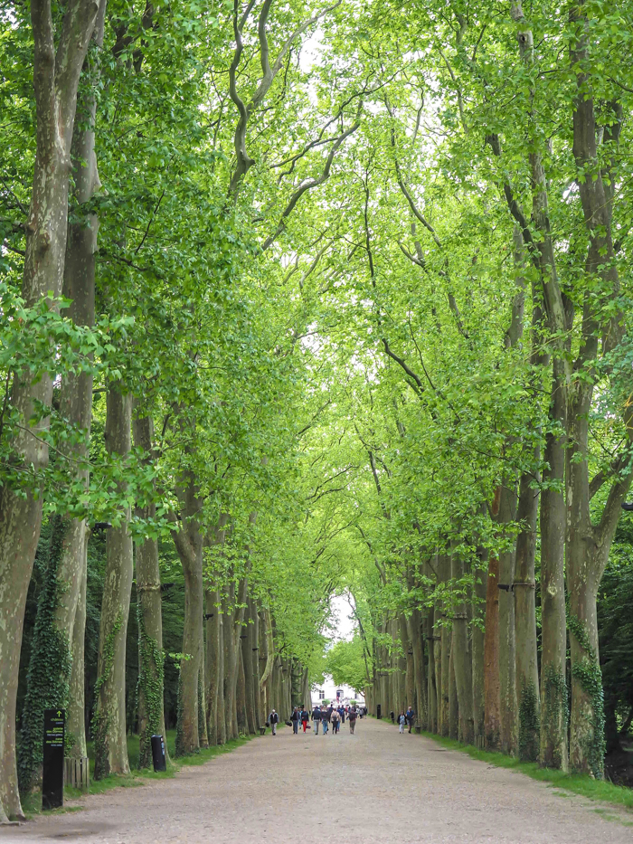 tree-lined property heading up to Chateau Chenonceau in the Loire Valley, France