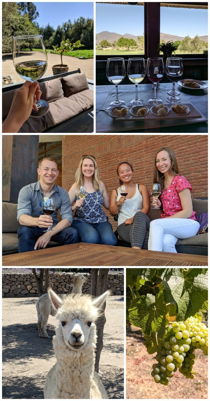 How to Spend One Week in Chile and Cover All the Bases   Wine tasting in Chile's Casablanca valley with alpacas and cheese   Viña Emiliana, Viña Casas del Bosque, Viña Bodegas RE #chile #valparaiso #alpacas #wine #whattodoinchile #weekinchile #winetasting #casablanca