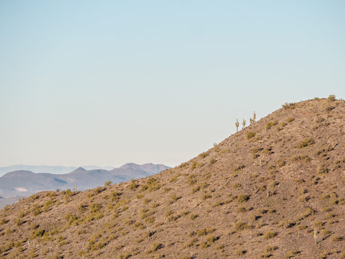 Cacti on the side of a mountain   What You Need to Know for Your Sunrise Hot Air Balloon Ride in Arizona   Scottsdale and Phoenix, Arizona hot air balloon rides with Hot Air Expeditions