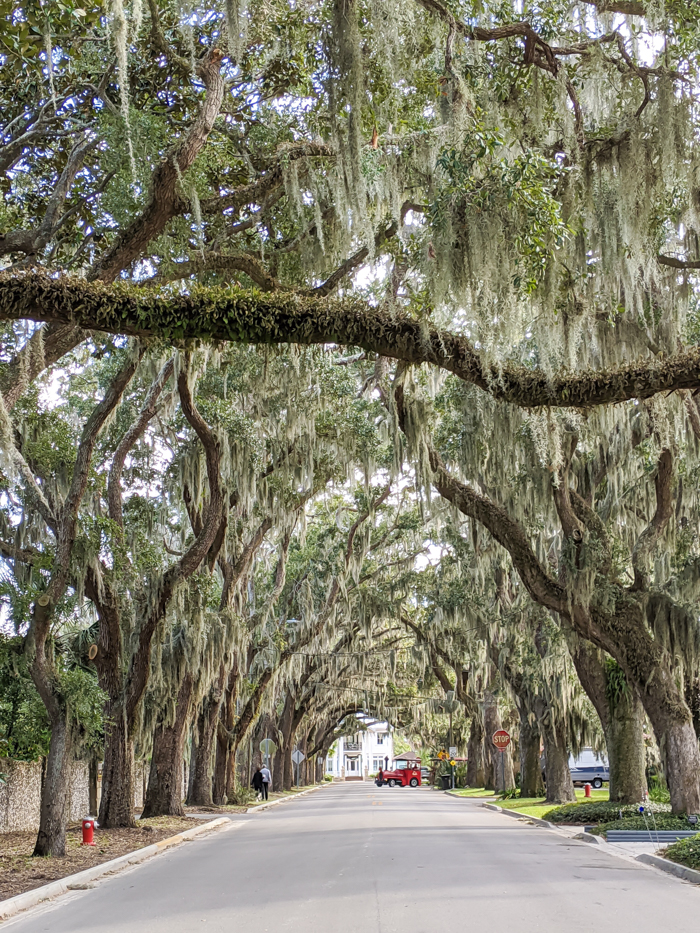 Magnolia Avenue / 1 day in St. Augustine, Florida: A quick trip to America's oldest city / 24 hours in St. Augustine / day trip to St. Augustine from Jacksonville or day trip to St. Augustine from Orlando