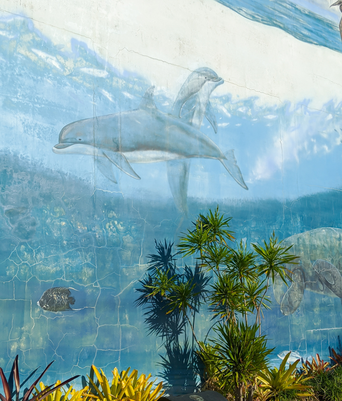 Wyland mural at Mote Marine Aquarium / 3 days in Sarasota, Florida / What to do in Sarasota, Where to eat in Sarasota, itinerary and information guide