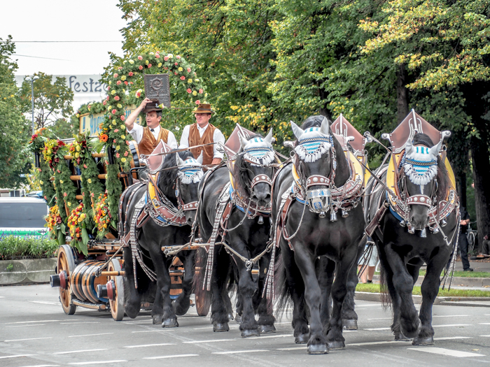 Horse-drawn beer carriages / Must-Know Oktoberfest tips from an Oktoberfest tour guide and locals / what you need to know about oktoberfest in munich, germany
