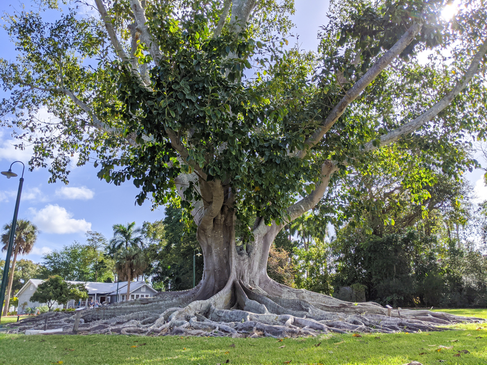 2 days in Fort Myers, Florida, a fun weekend itinerary: Edison and Ford Winter Estates, banyan tree and botanical gardens