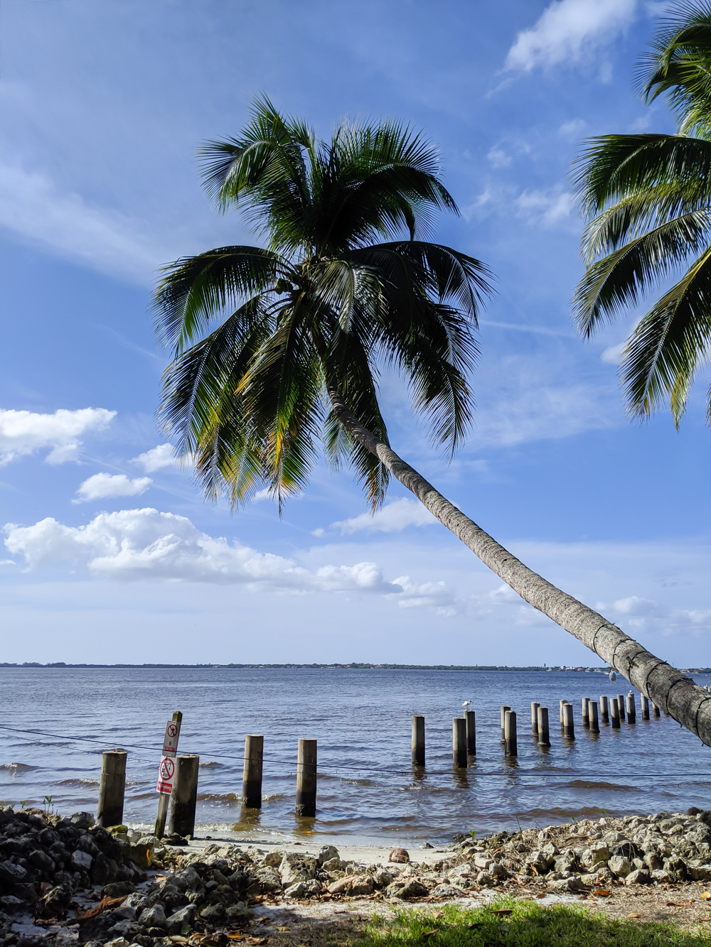 2 days in Fort Myers, Florida, a fun weekend itinerary: palm trees