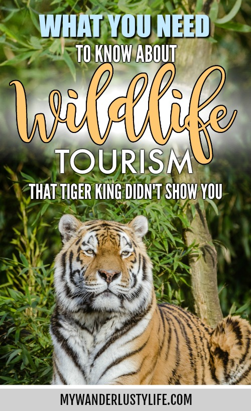 I worked at Big Cat Rescue. Here's what you need to know about Tiger King and travel / Wildlife tourism / Joe Exotic / cub petting #tigerking #wildlifetourism #wildlife #tigers #bigcatrescue #netflix #tigerselfie