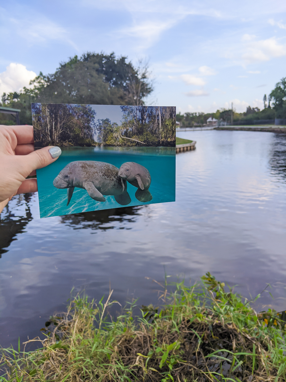 2 days in Fort Myers, Florida, a fun weekend itinerary: Manatee Park