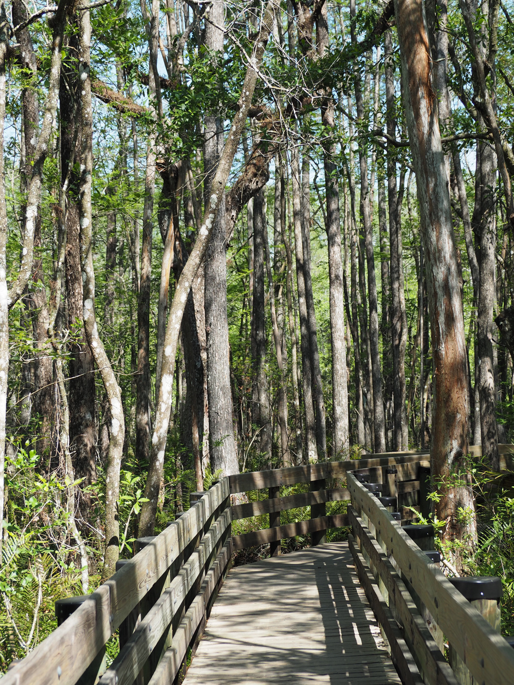 2 days in Fort Myers, Florida, a fun weekend itinerary: Six Mile Slough Preserve boardwalk