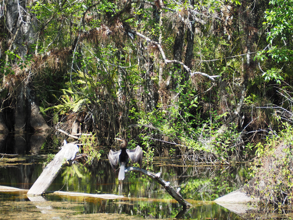 2 days in Fort Myers, Florida, a fun weekend itinerary: Six Mile Slough Preserve bird