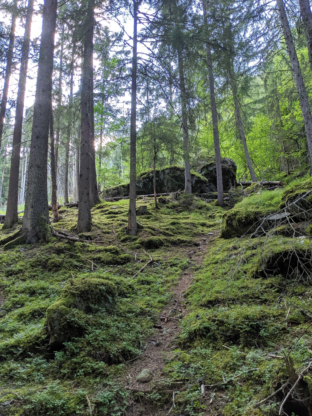Awesome things to do in Chamonix in the summer: Alpine bucket list / mossy forest