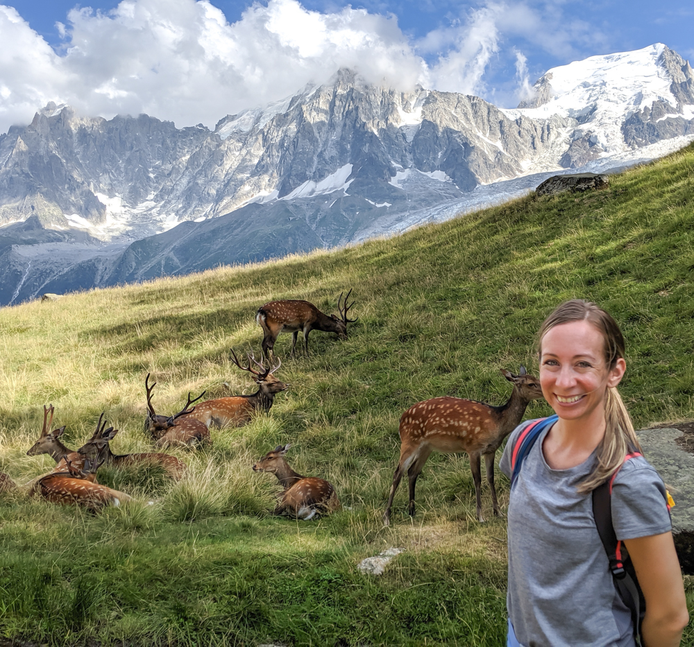 Awesome things to do in Chamonix in the summer: Alpine bucket list / Merlet Animal Park deer and views