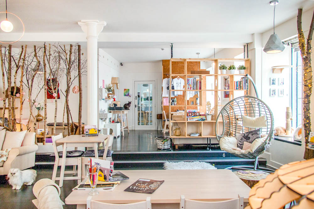 inside of a cat cafe with tables, chairs, shelves, etc.