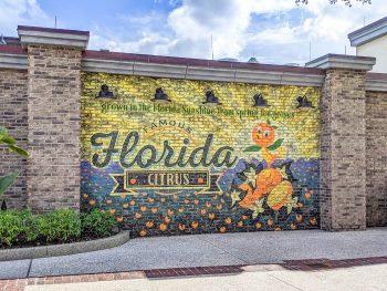 The Best Things to Do in Orlando Besides Theme Parks | Orlando, Florida for adults! Water sports, adventure activities, hiking, nature, craft beer, professional sports, and more!