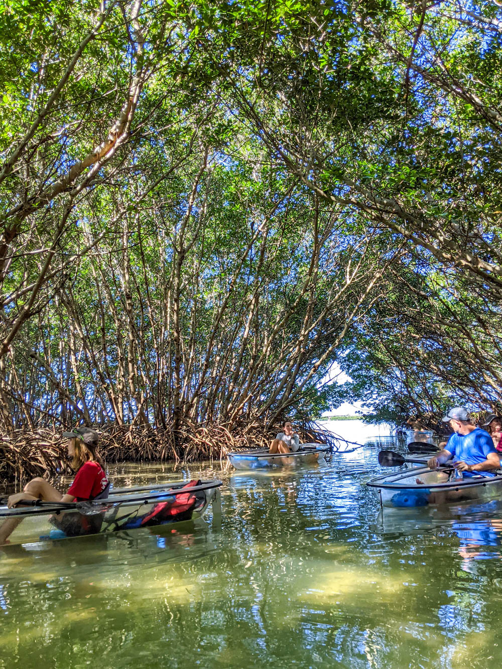 group in clear kayaks in a mangrove tunnel