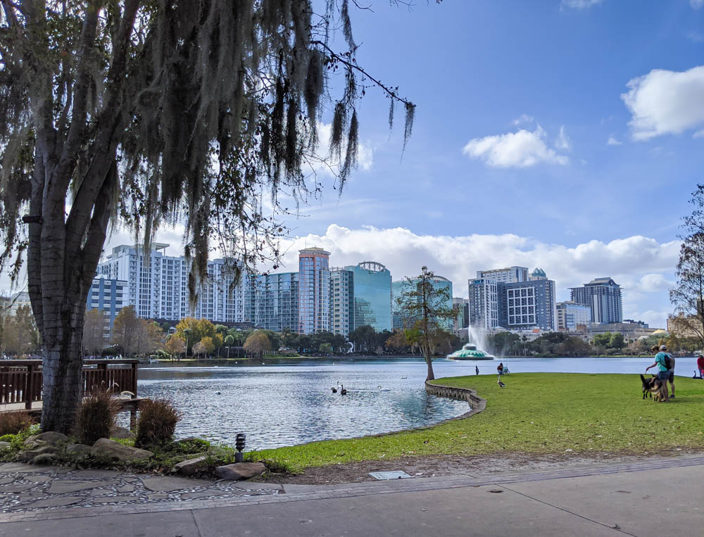 downtown skyline behind a lake and tree with spanish moss