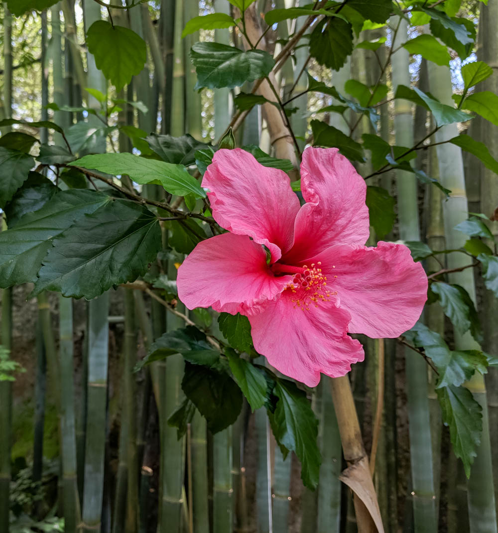 pink hibiscus | Awesome breweries in palm beach county, florida | craft beer and cider in west palm beach
