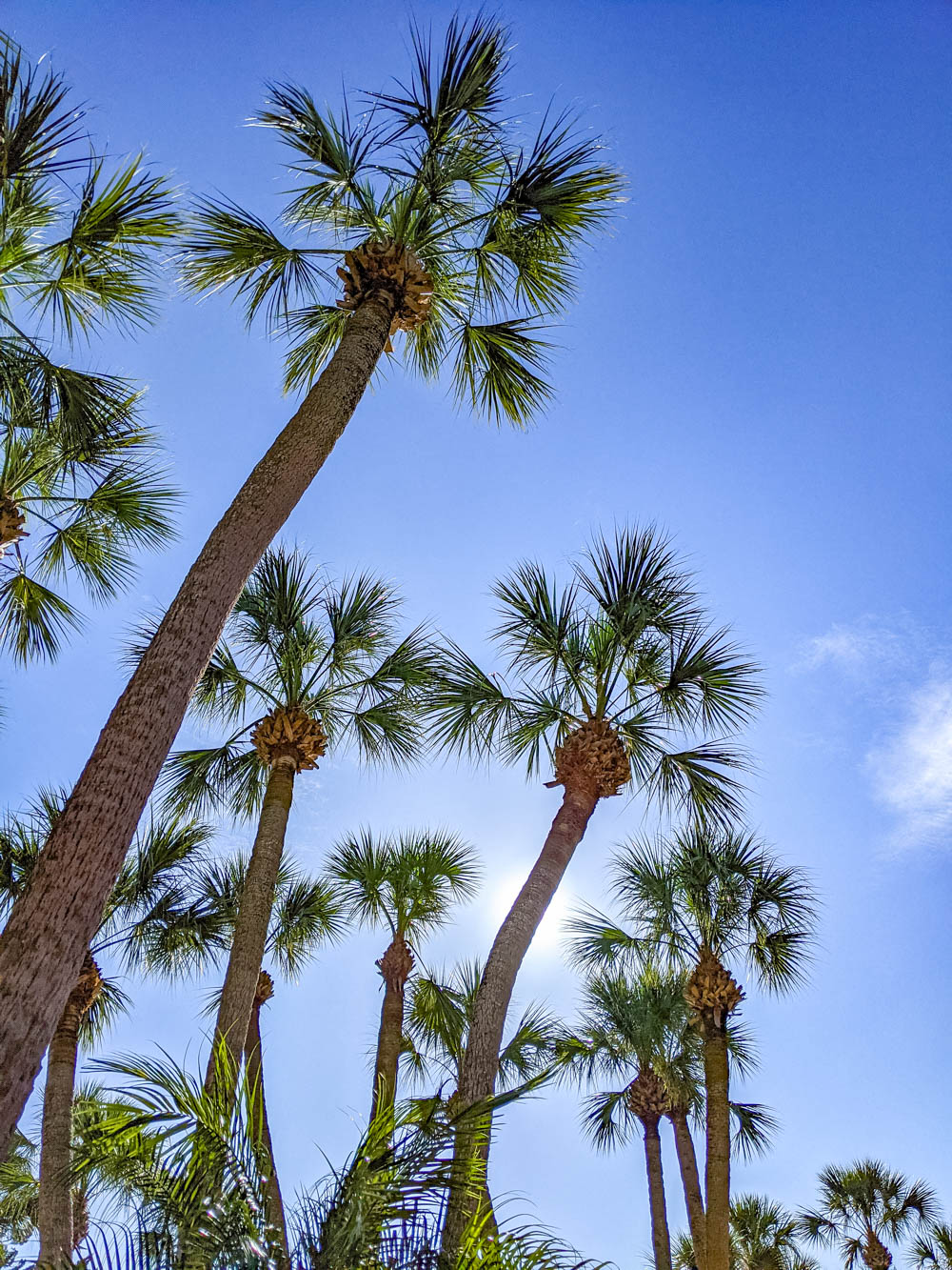 palm trees | Awesome breweries in palm beach county, florida | craft beer and cider in west palm beach