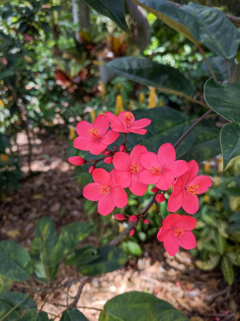 pink flowers | Awesome breweries in palm beach county, florida | craft beer and cider in west palm beach
